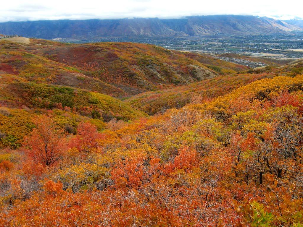 Fall on View BM