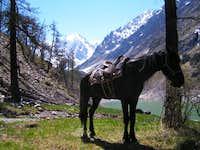 Horse Transporrtation