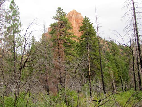 Head of Swamp Canyon