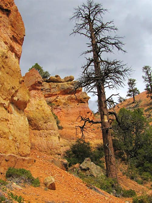 Between Hat Shop & Bryce Point