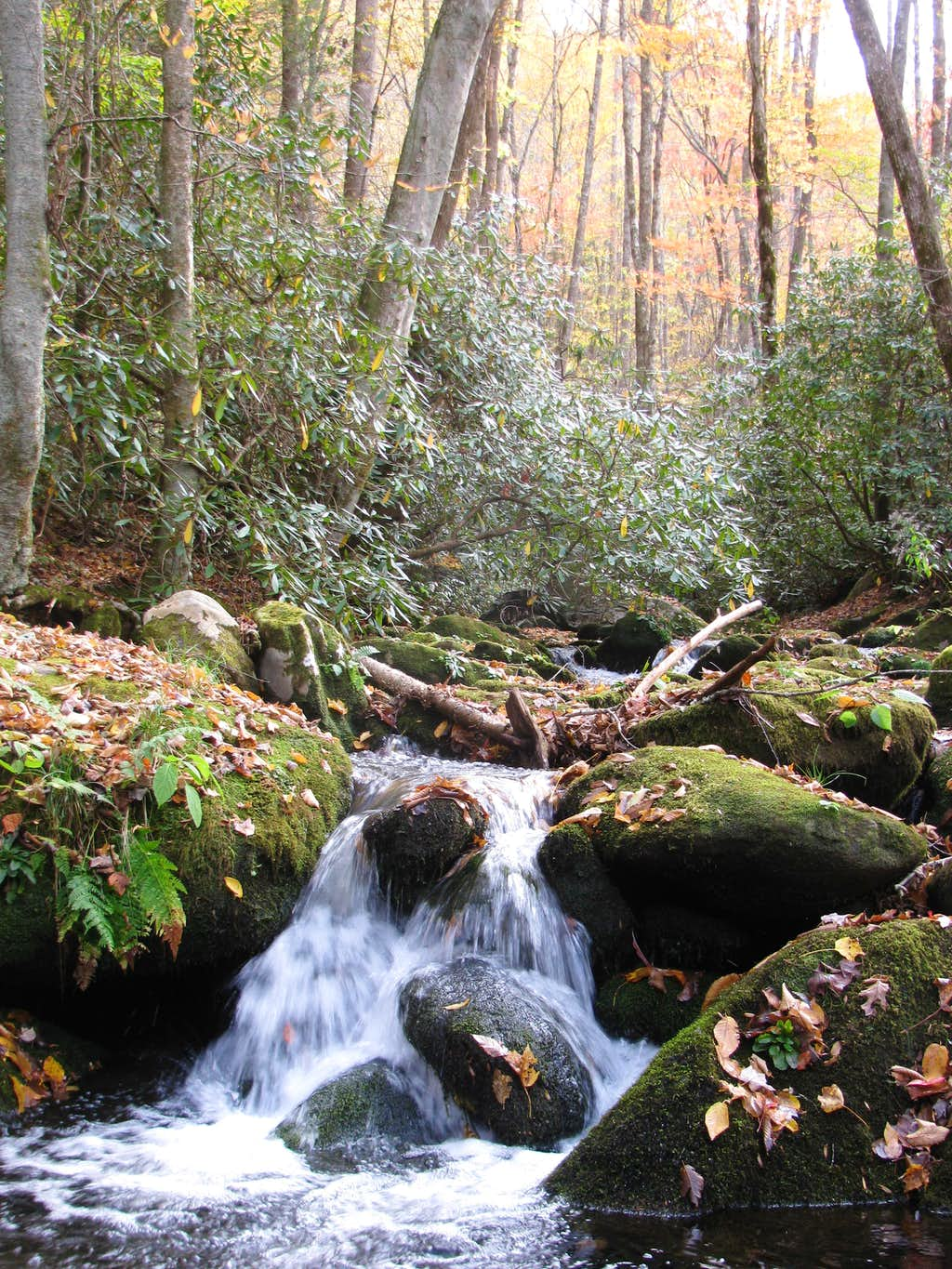 Signs of Autumn on Jakes Creek