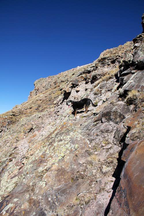 Duchess scrambling up Precipice