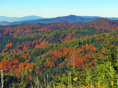 Forest in Beskidy: beech, larch and spruce