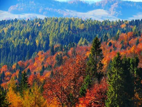 Last days of Polish Golden Autumn