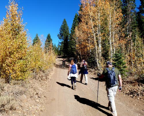 Group walking north up Jones Valley Road with fall colors in full bloom.