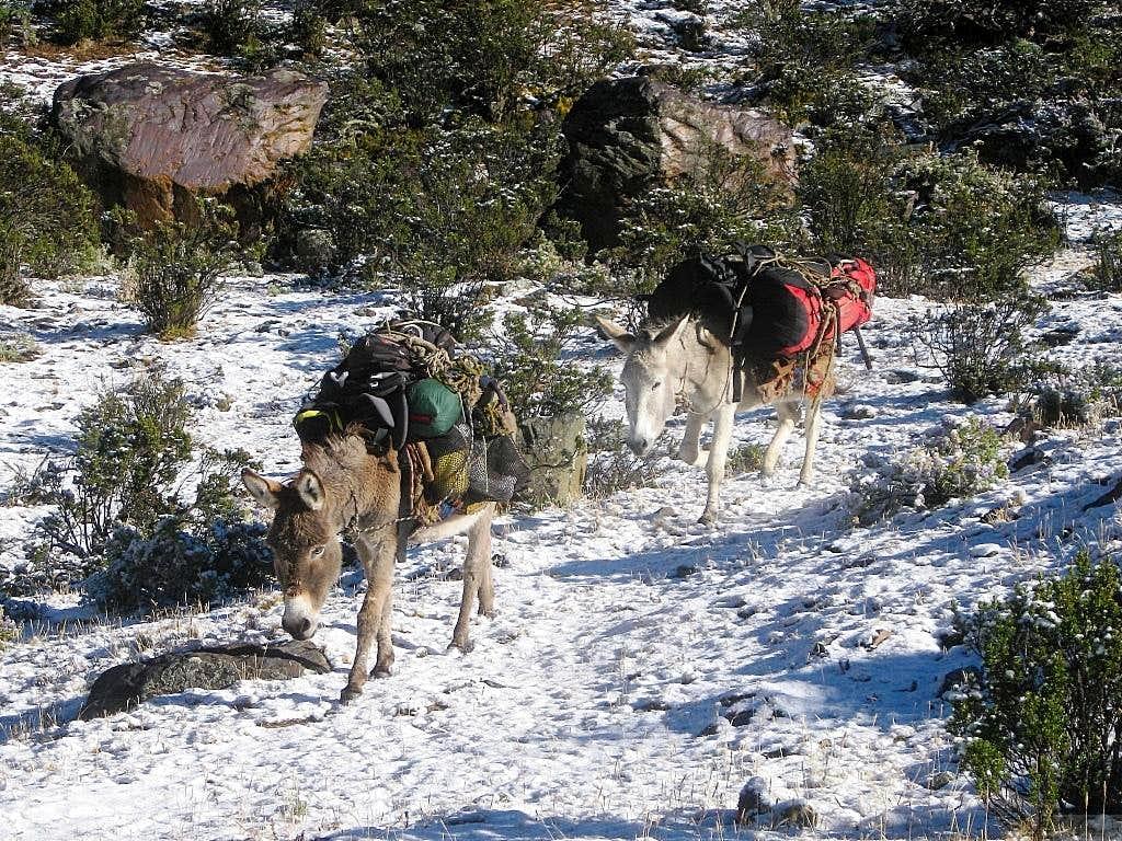 Our mules in Quebrada Rurec
