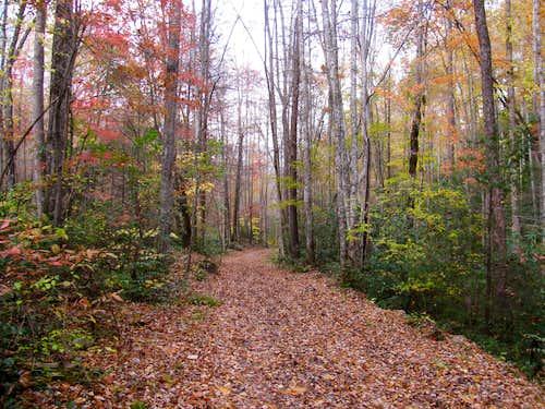 Autumn Colors on Jakes Creek Trail