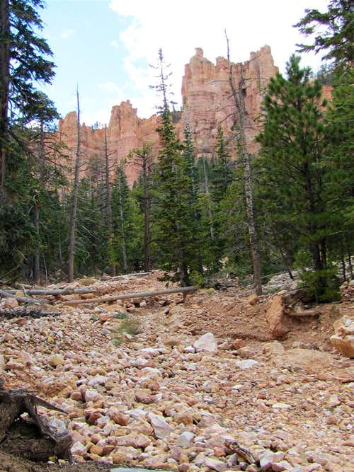North Fork of Black Birch Canyon