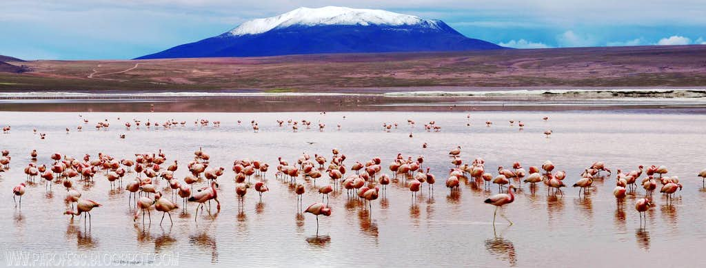 Point 5660m and Flamingoes...panorama