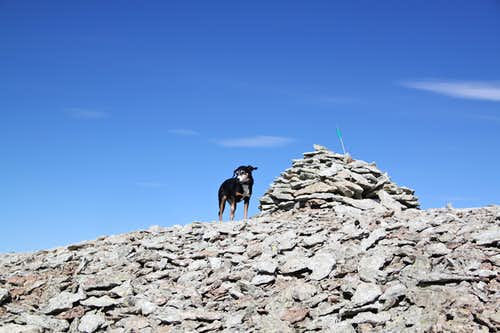 Duchess on the summit