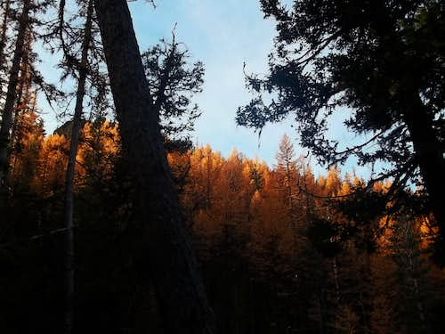 Light on the larches
