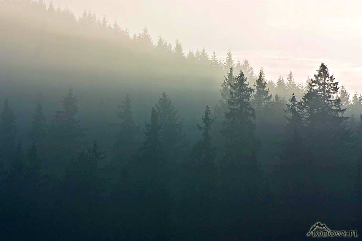 Javorina misty forest : Photos, Diagrams & Topos : SummitPost