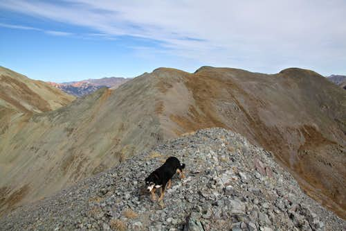 Duchess on the summit of Spencer