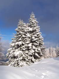Merry Christmas - 2012