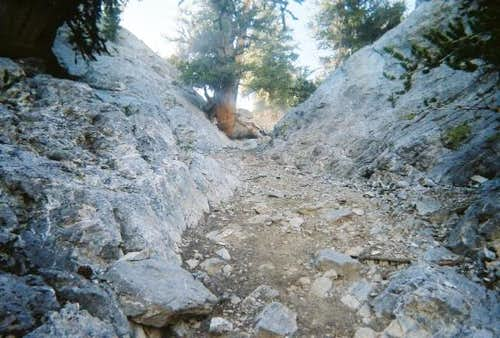 Looking up the steep gully.
