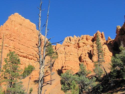 On Losee Canyon Trail
