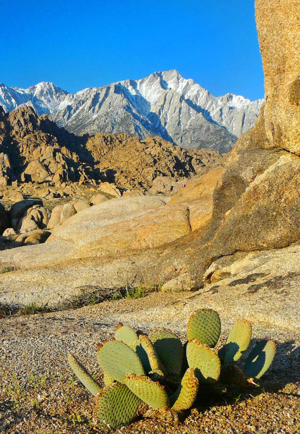 Lone Pine Sierra from the Alabama Hills