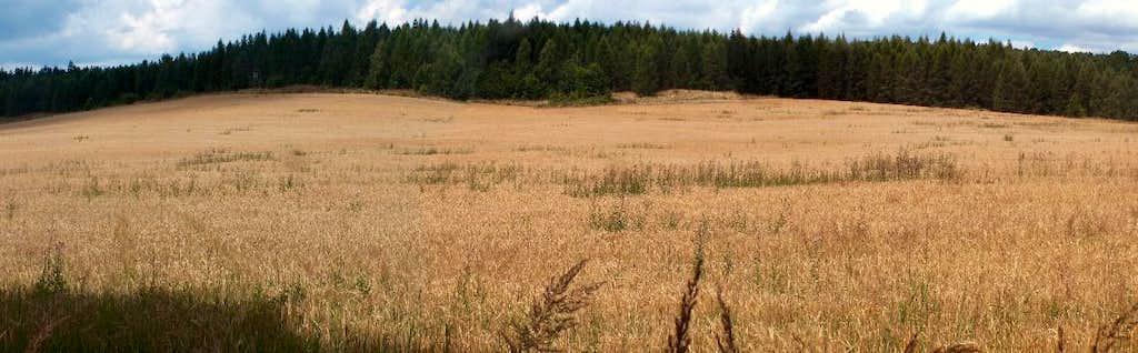 Wheat fields in the Strzelin hills