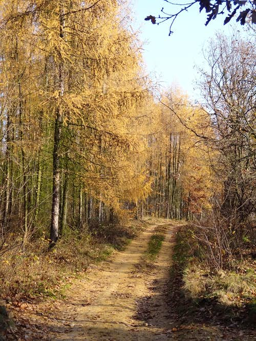 Trail on Gromnik in autumn