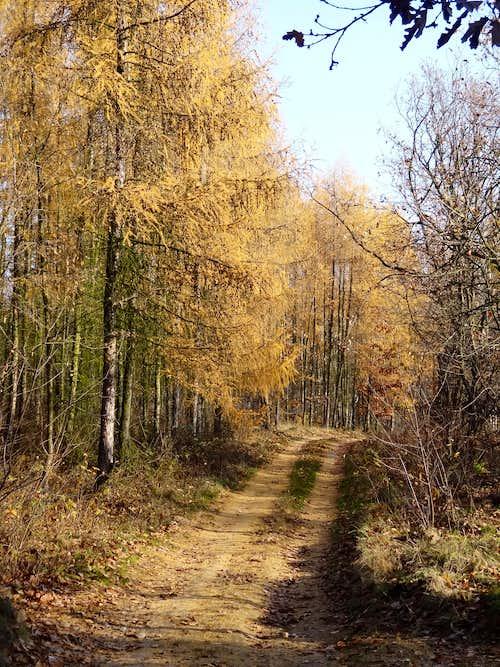 Trail on Gromnik in autumn