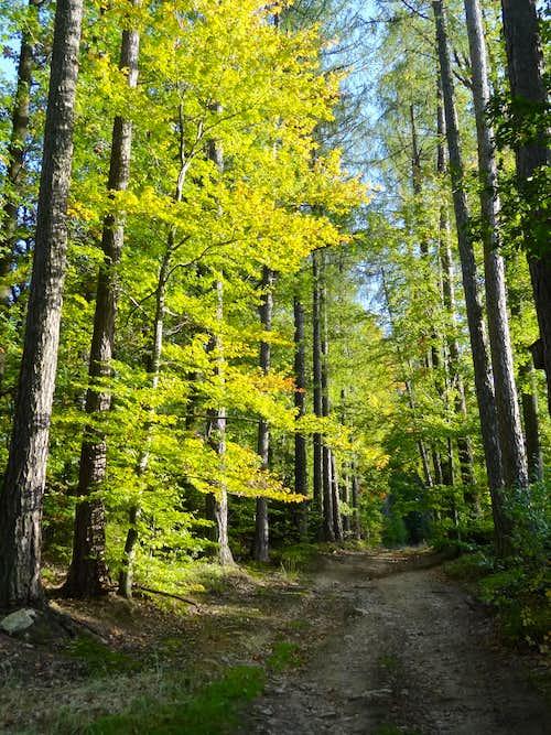 Early autumn tones