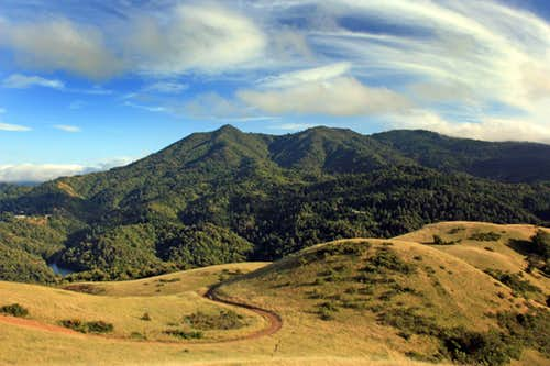 Mt. Tamalpais from Bald Hill