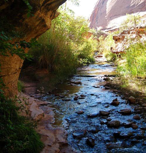 Negro Bill Canyon