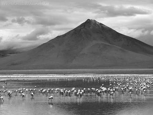 Volcano and flamingoes (B&W)