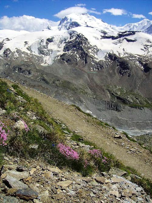 Monte Rosa`s flowers