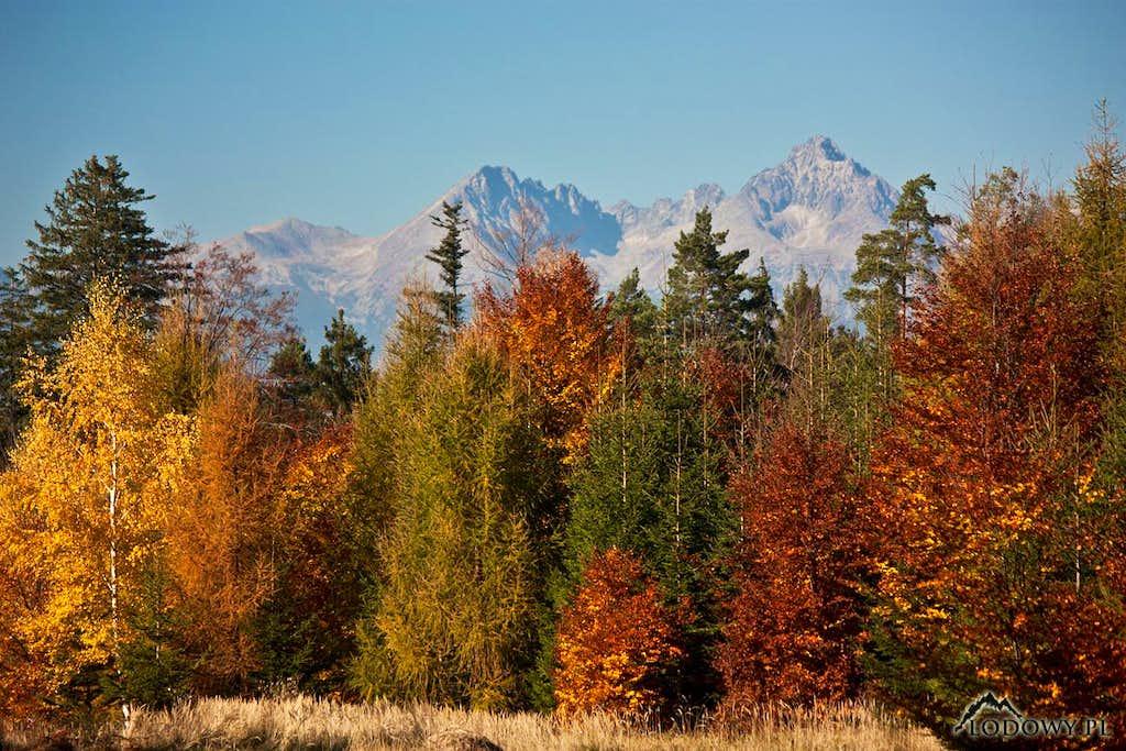 Tatra October of Gold