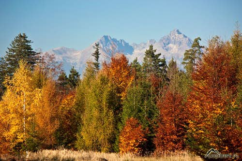 Tatra October of Gold