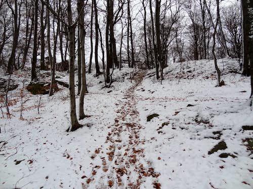 Snowy trail to Gromnik