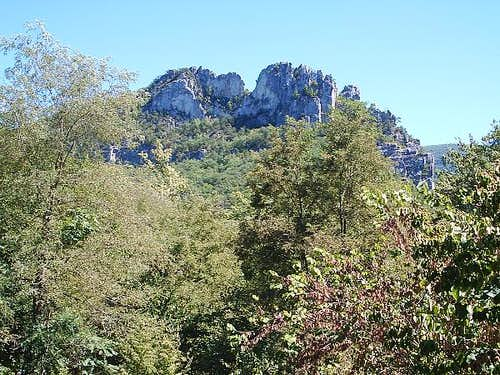 Seneca Rocks Behind Forest