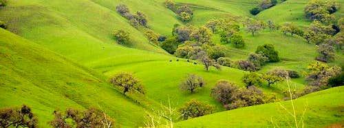 Green Hills of Diablo