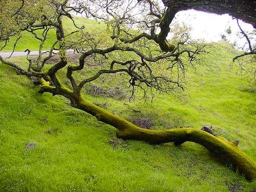 A Laying Log Gathers Much Moss