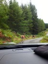 Highland Roadblock