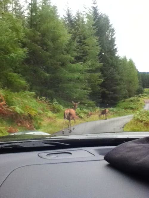 Highland Roadblock