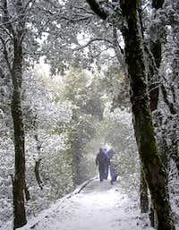 A Snowy Hike - The Summit Trail