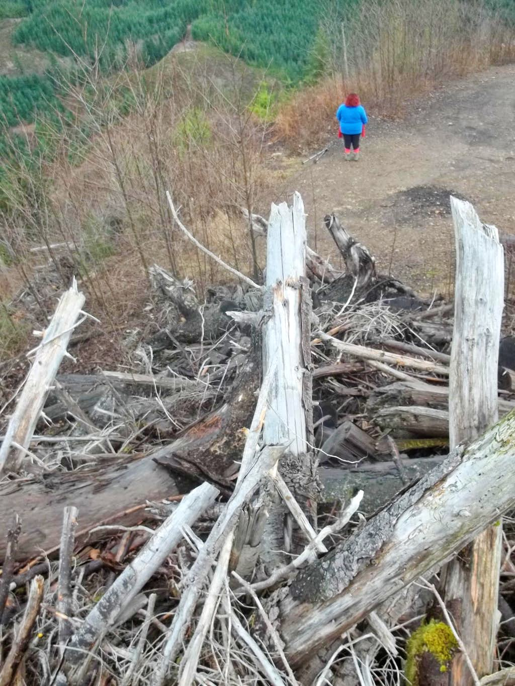 Looking down from the log pile