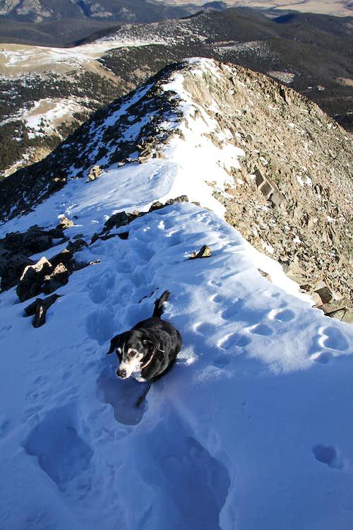 Duchess struggling in deep snow