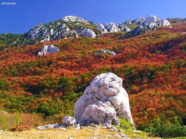 Rozanski Vrh from Zelengrad