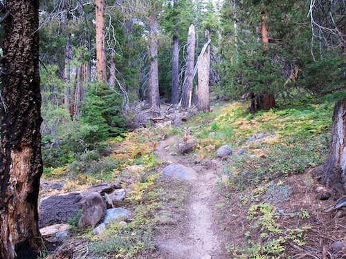 Bear Ridge Trail