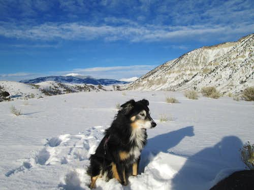 My dog Cinco, with Mount Everts in the background-Yellowstone National Park