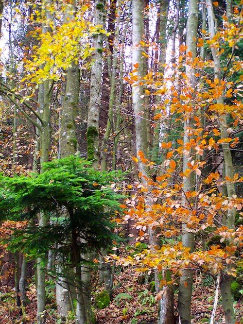 The last colours of autumn