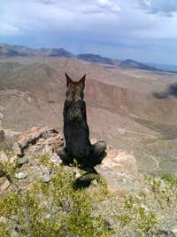German Shepherd atop Bishop's Cap