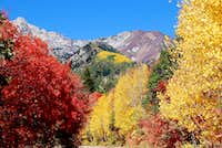 White and Red Baldy Autumn