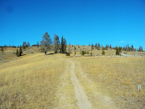 Trail to Yellowstone Lake Overlook