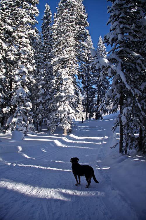 Beautiful trail system