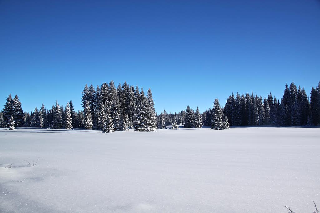 Winter Grand Mesa scenery