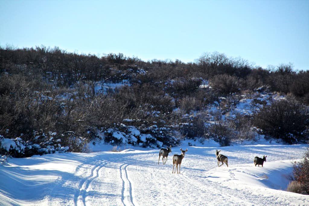 More deer than cross country skiers